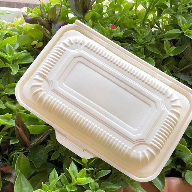 ظرف یکبار مصرف گیاهی در دار
